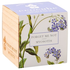 Ecocube Forget Me Not