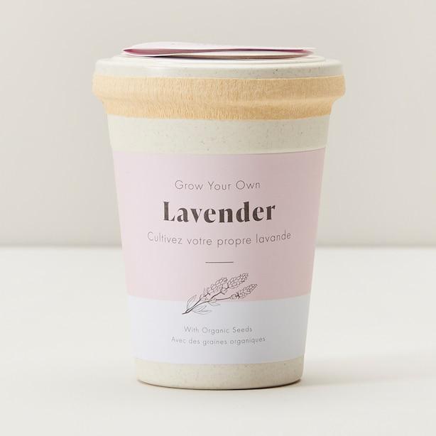 Ecopot Lavender Grow Kit