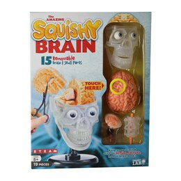 Smartlab The Amazing Squishy Brain