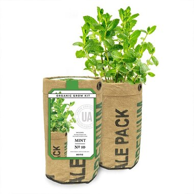 URBAN AGRICULTURE MINT GROW KIT