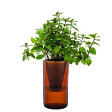 MINT AND LEMON BASIL HYDROPONIC TUMBLER GARDEN