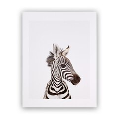 Baby Zebra Little Darling Photographic Art Print – 8.5 x 11