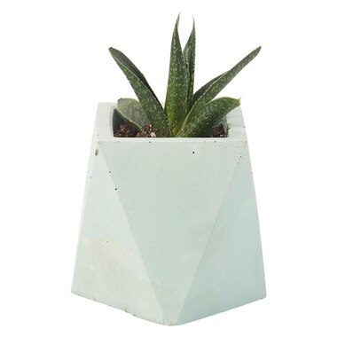 HOMEBODY COLLECTIVE TALL HEXAGON PLANTER POT MINT SOLID