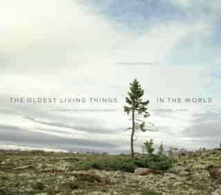 The Oldest Living Things In The World by Rachel Sussman