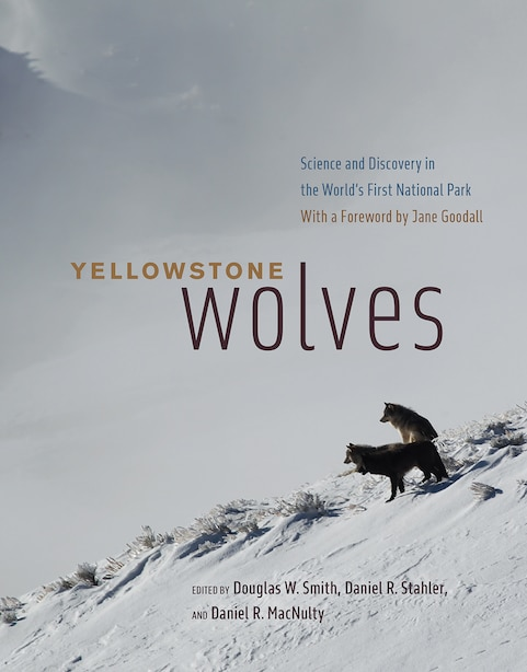 Yellowstone Wolves: Science And Discovery In The World's First National Park by Douglas W. Smith