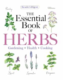 Reader's Digest The Essential Book of Herbs: Gardening * Health * Cooking by Reader's Digest